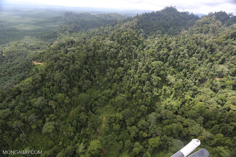 Heavily logged rainforest with an oil palm plantation in the distance -- sabah_aerial_2793