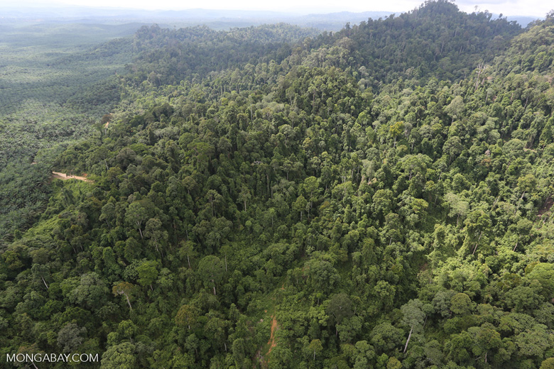 Heavily logged rainforest with an oil palm plantation in the distance -- sabah_aerial_2794
