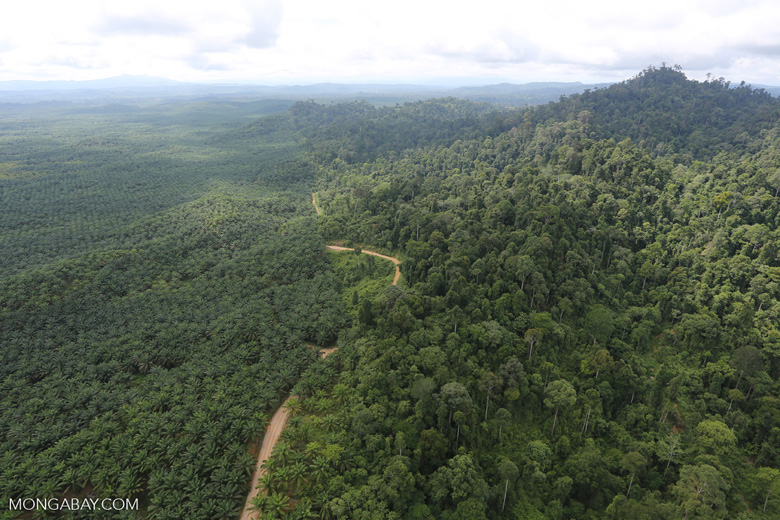 Logged forest and oil palm in Borneo -- sabah_aerial_2802