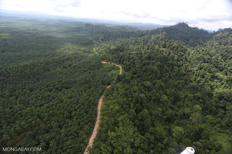 Logged forest and oil palm in Borneo -- sabah_aerial_2805