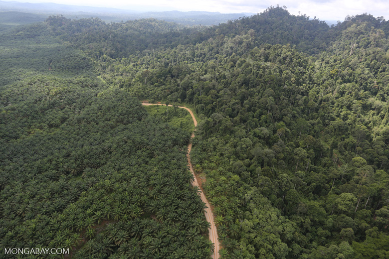 Logged forest and oil palm in Borneo -- sabah_aerial_2809