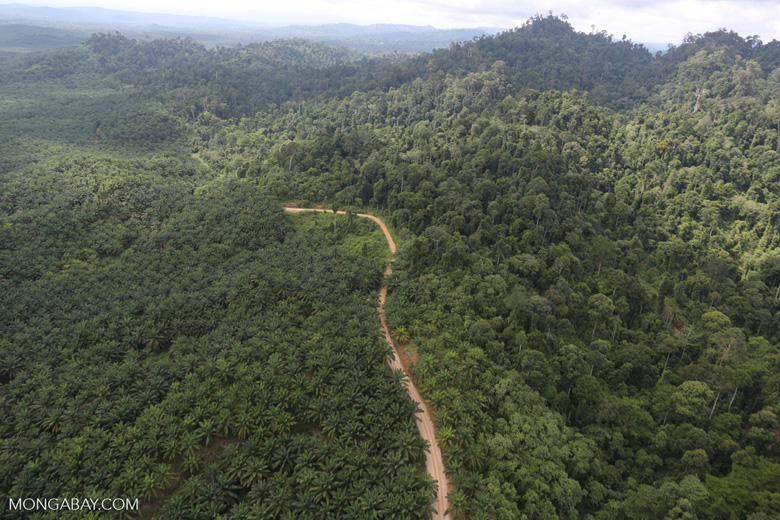 Logged forest and oil palm in Borneo -- sabah_aerial_2810