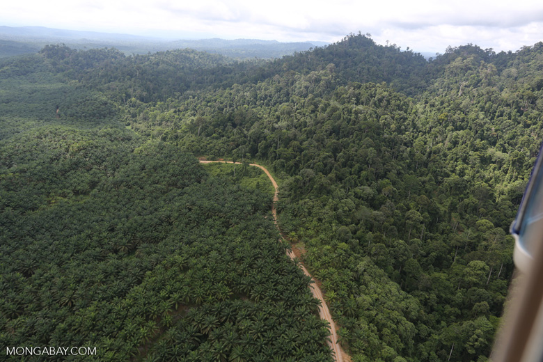 Logged forest and oil palm in Borneo -- sabah_aerial_2812