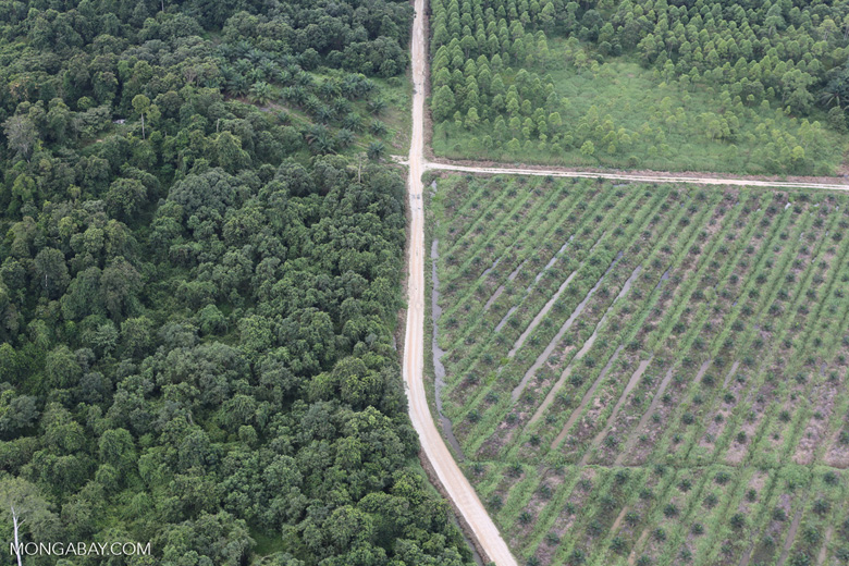 Logged forest, oil palm estate, and timber plantation in Borneo -- sabah_aerial_2830