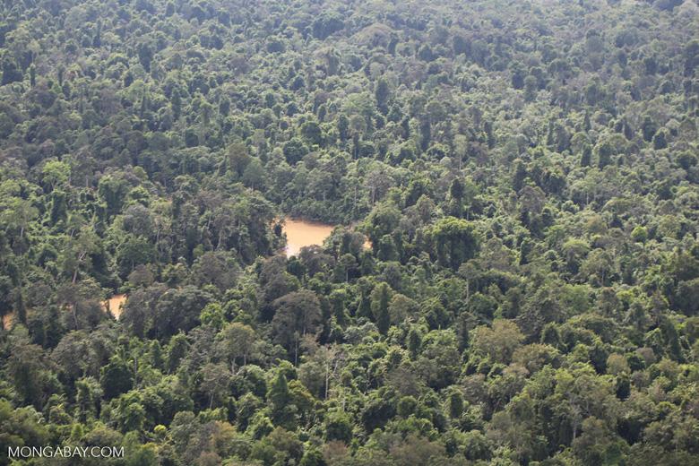Kinabatangan River -- sabah_aerial_2885