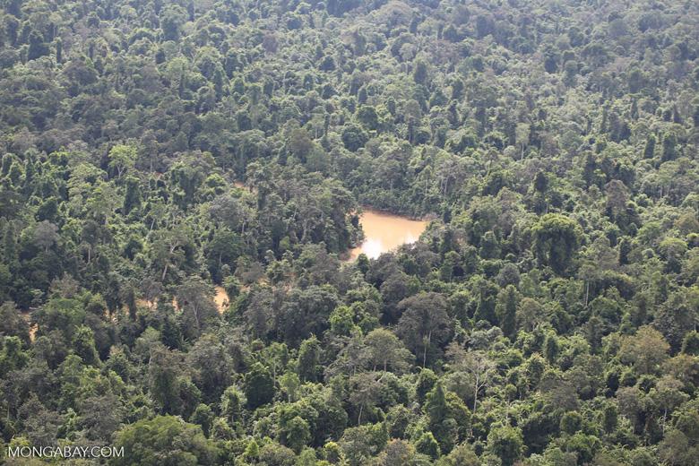 Kinabatangan River -- sabah_aerial_2890