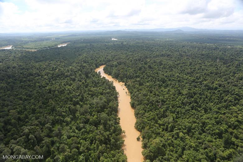 Kinabatangan River -- sabah_aerial_2895
