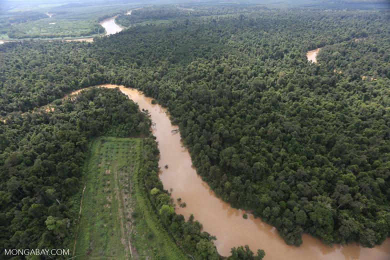 Clearing for oil palm along the Kinabatangan River  -- sabah_aerial_2920