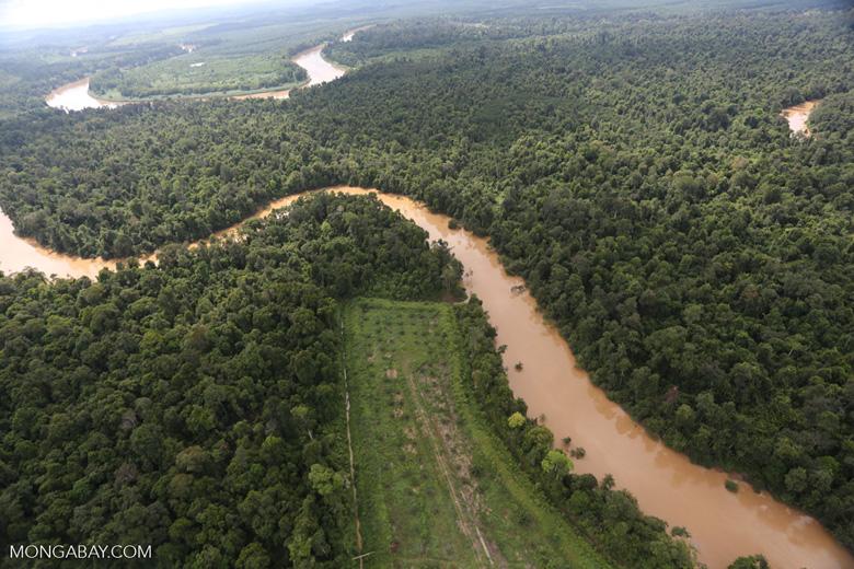 Clearing for oil palm along the Kinabatangan River  -- sabah_aerial_2923