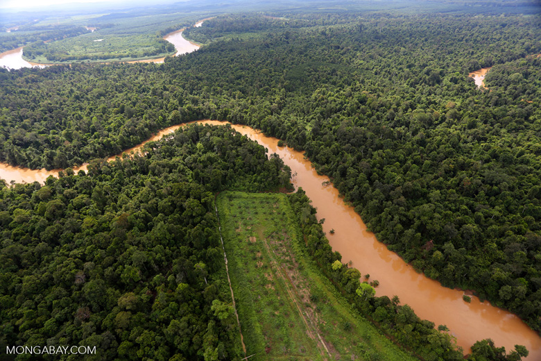 Clearing for oil palm along the Kinabatangan River