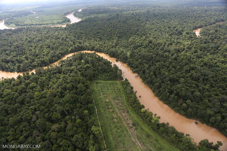 Clearing for oil palm along the Kinabatangan River  -- sabah_aerial_2927