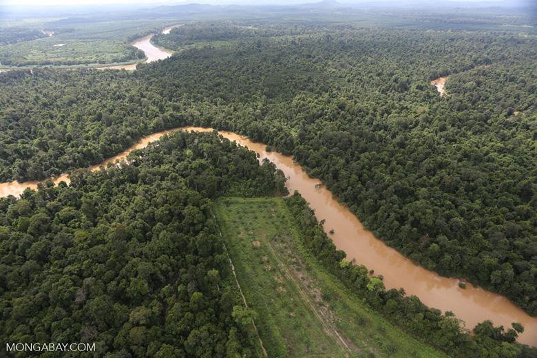 Clearing for oil palm along the Kinabatangan River  -- sabah_aerial_2930