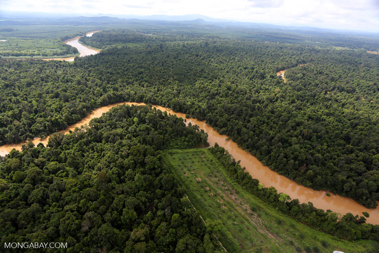 Clearing for oil palm along the Kinabatangan River  -- sabah_aerial_2934