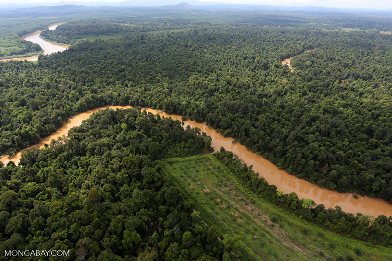 Clearing for oil palm along the Kinabatangan River  -- sabah_aerial_2936