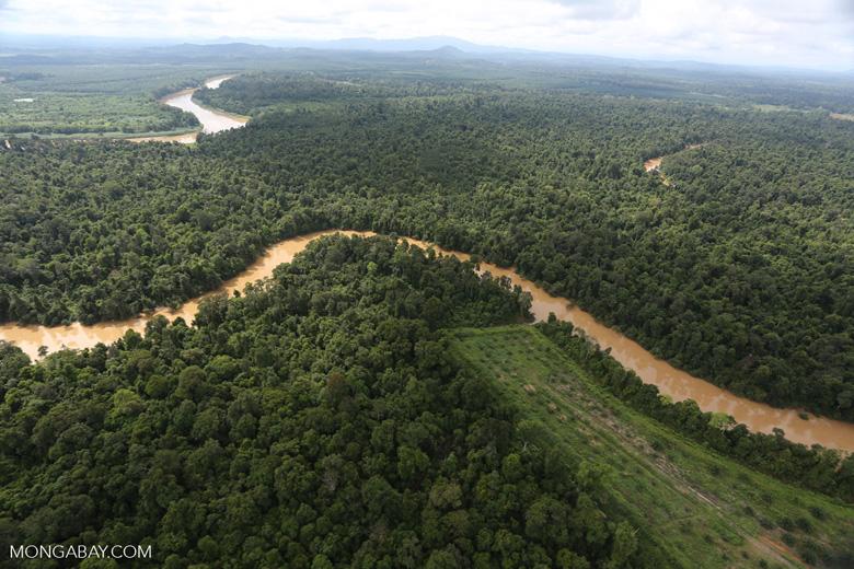 Clearing for oil palm along the Kinabatangan River  -- sabah_aerial_2937