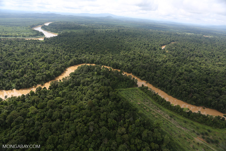 Clearing for oil palm along the Kinabatangan River  -- sabah_aerial_2940