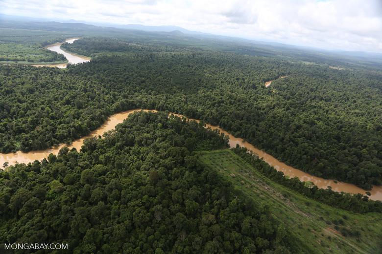 Clearing for oil palm along the Kinabatangan River  -- sabah_aerial_2942