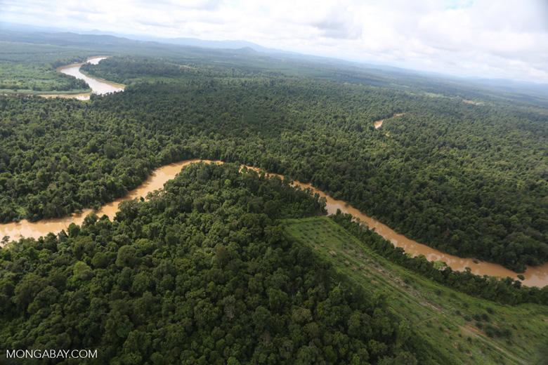 Clearing for oil palm along the Kinabatangan River  -- sabah_aerial_2943