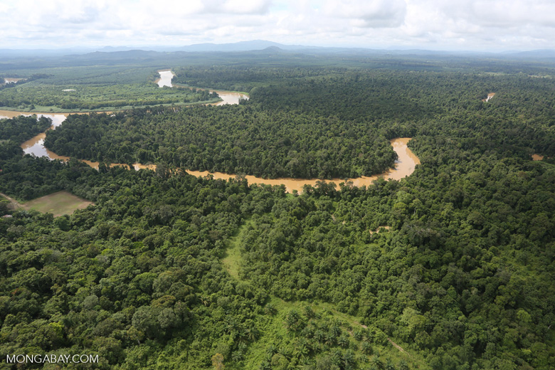 Forest degradation along the Kinabatangan River