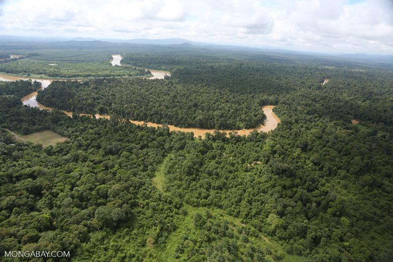 Forest degradation along the Kinabatangan River  -- sabah_aerial_2945