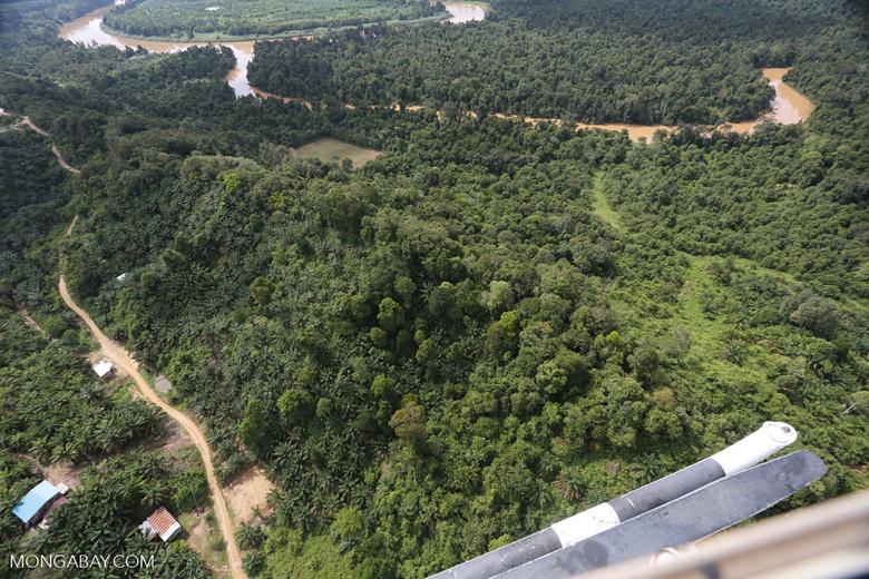 Forest degradation along the Kinabatangan River  -- sabah_aerial_2951