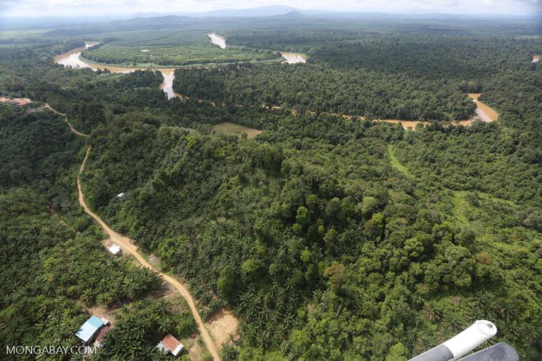 Oil palm near the Kinabatangan -- sabah_aerial_2954