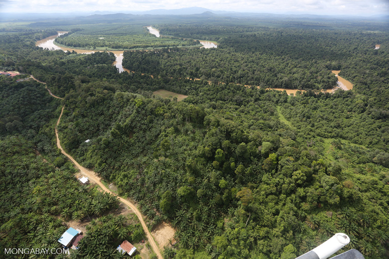 Oil palm near the Kinabatangan -- sabah_aerial_2955