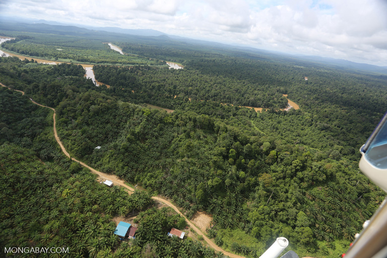 Oil palm near the Kinabatangan -- sabah_aerial_2962