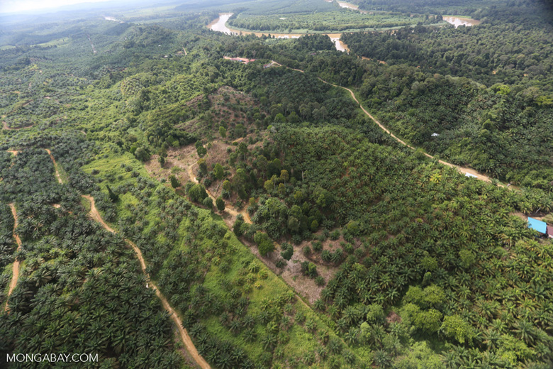 Oil palm near the Kinabatangan -- sabah_aerial_2964