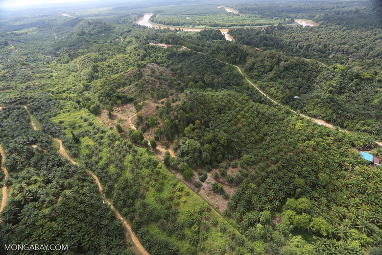 Oil palm near the Kinabatangan -- sabah_aerial_2966