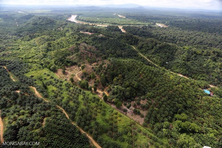 Oil palm near the Kinabatangan -- sabah_aerial_2970