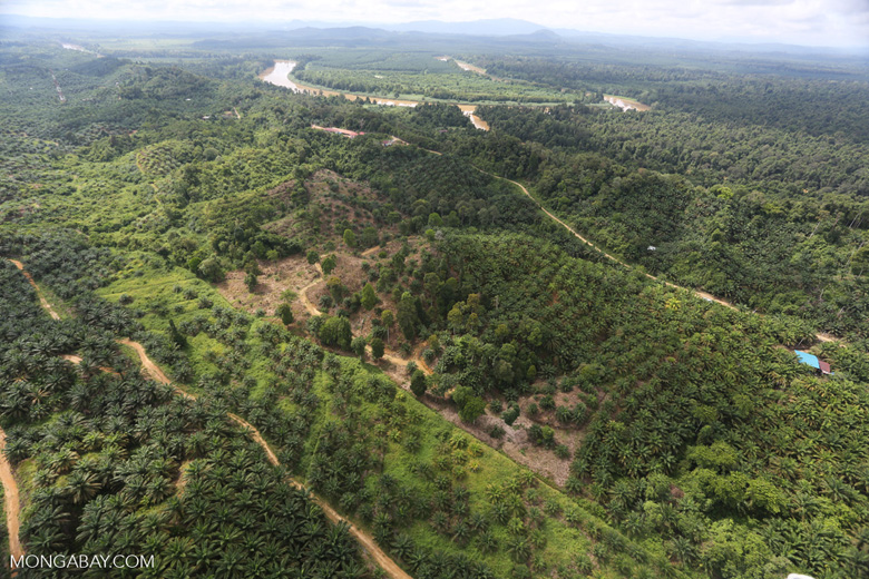 Oil palm near the Kinabatangan -- sabah_aerial_2971