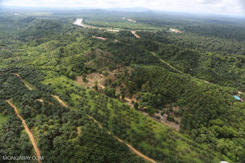 Oil palm near the Kinabatangan -- sabah_aerial_2972