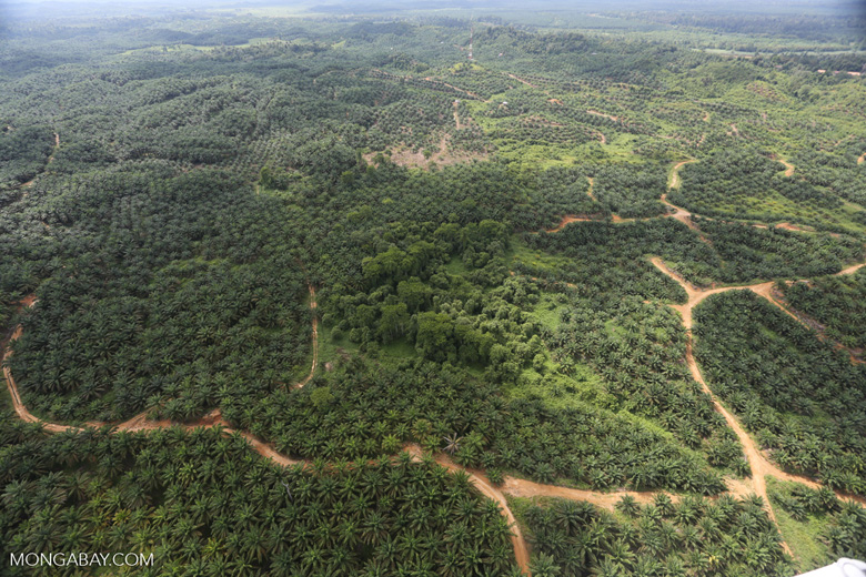 Oil palm near the Kinabatangan -- sabah_aerial_2976