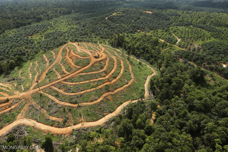 Oil palm estate and rainforest in Malaysian Borneo -- sabah_aerial_3014