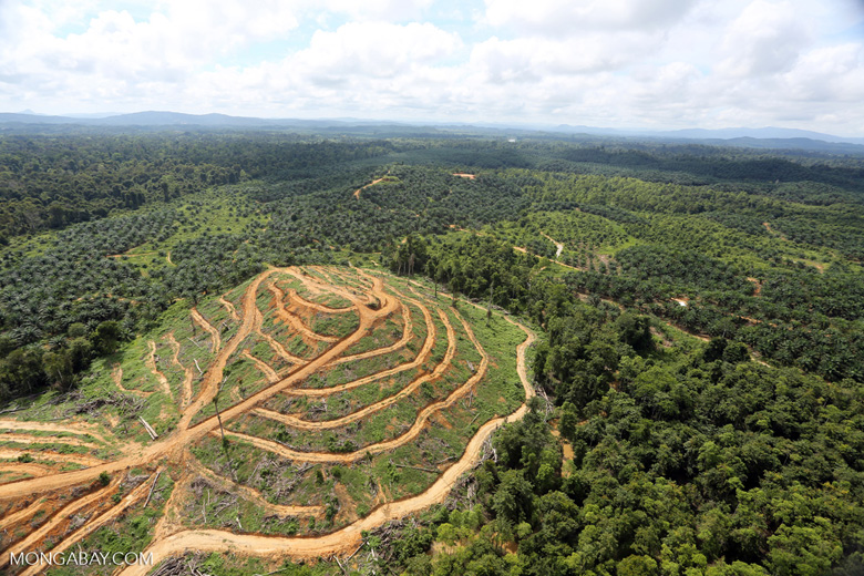 Oil palm estate and rainforest in Malaysian Borneo -- sabah_aerial_3016