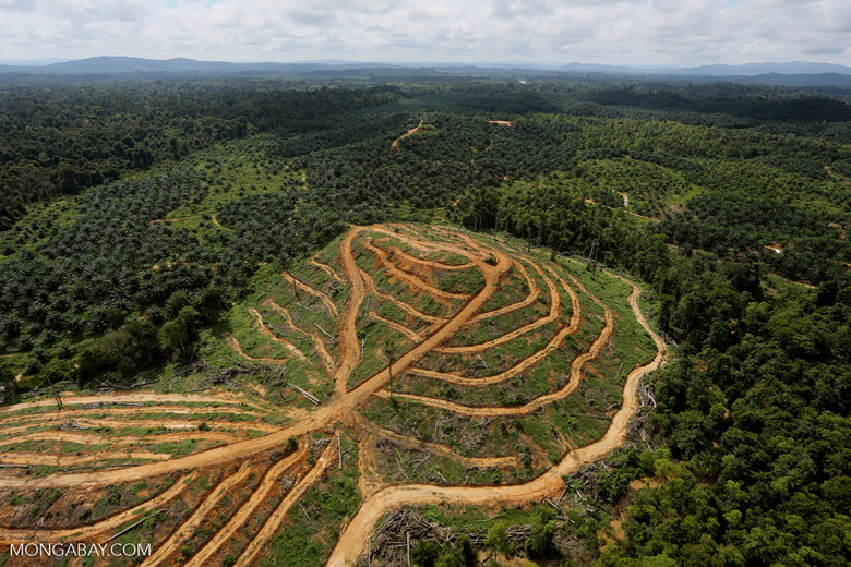 Oil palm estate and rainforest in Malaysian Borneo -- sabah_aerial_3019