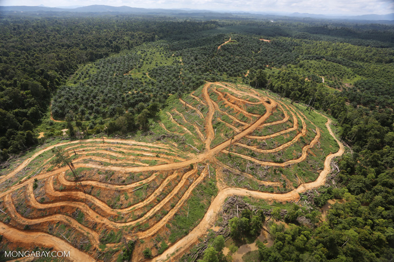 Oil palm estate and rainforest in Malaysian Borneo -- sabah_aerial_3021