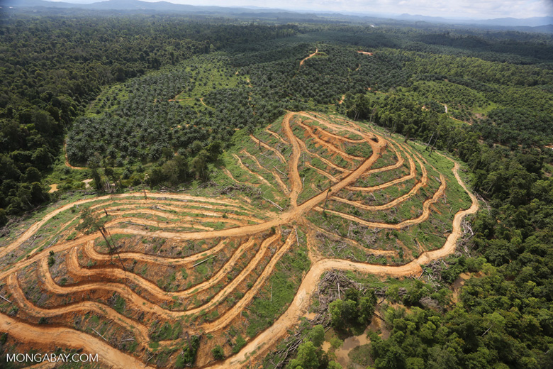Oil palm estate and rainforest in Malaysian Borneo -- sabah_aerial_3022