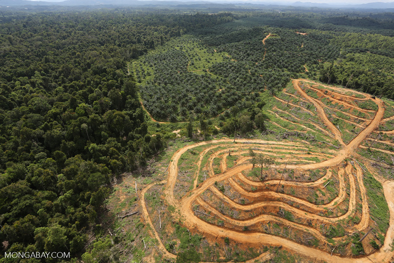 Oil palm estate and rainforest in Malaysian Borneo -- sabah_aerial_3031
