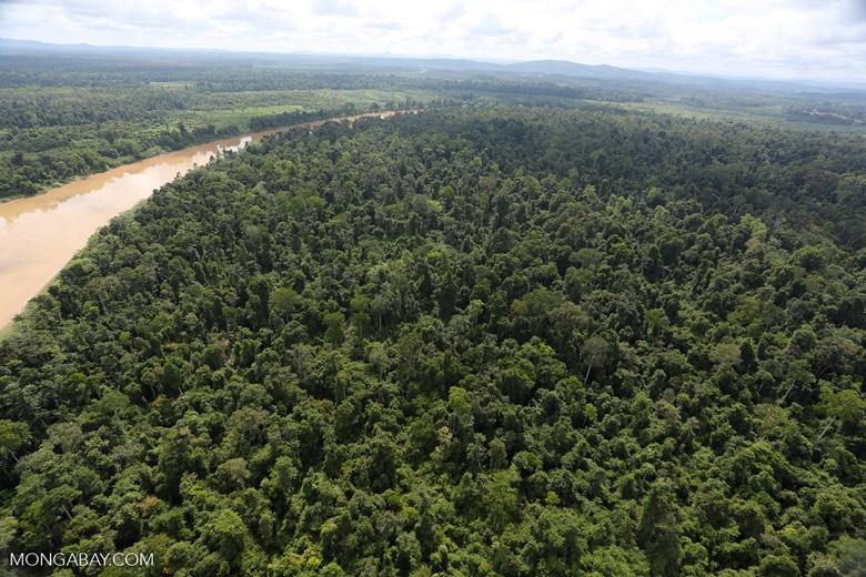 Kinabatangan River -- sabah_aerial_3042