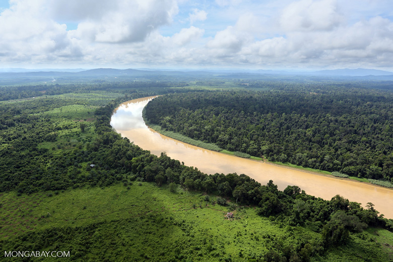 Deforestation along the Kinabatangan River. Photo by Rhett A. Butler