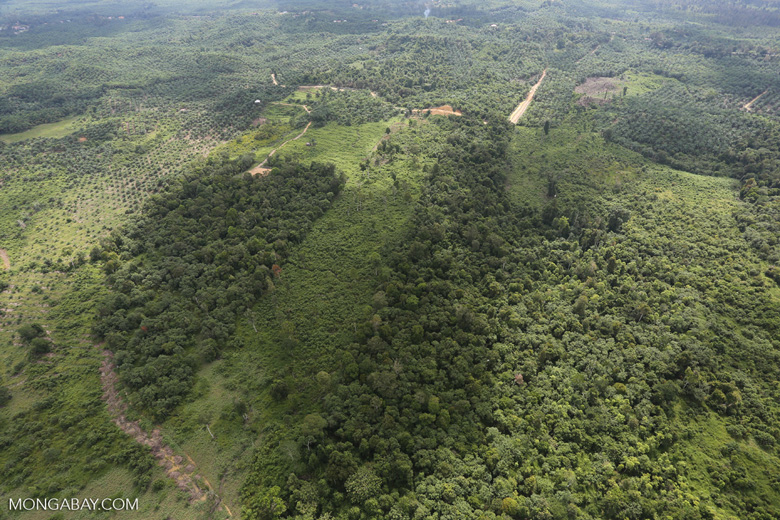 Forest clearing in Sabah -- sabah_aerial_3076