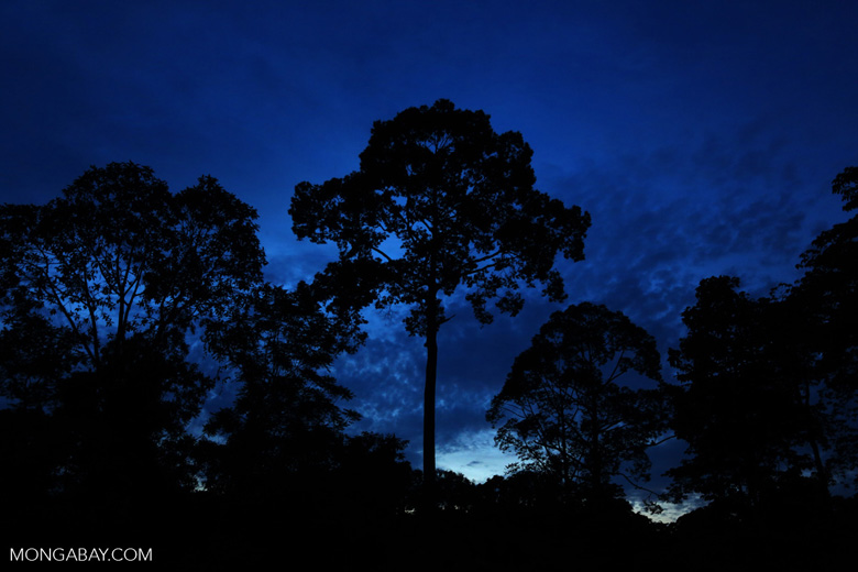 Rainforest at dusk (photo)