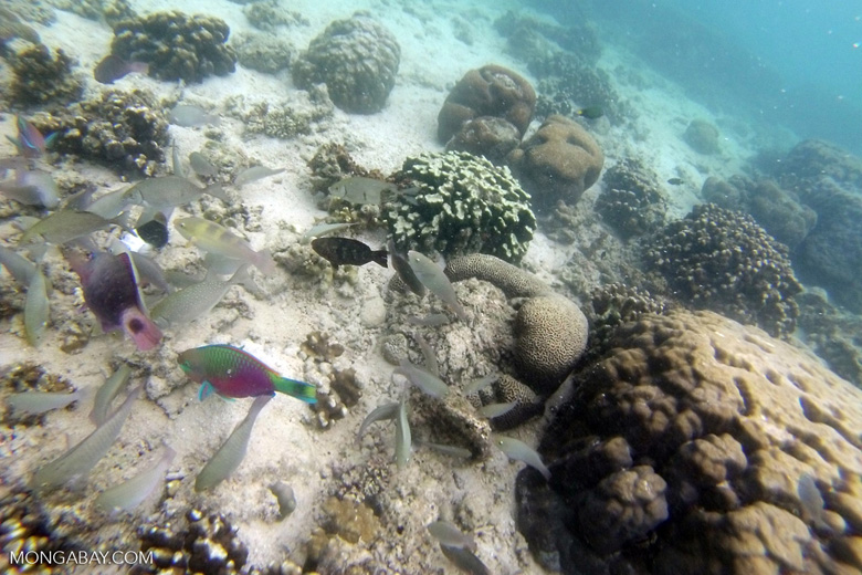Fish -- sabah_underwater_0000