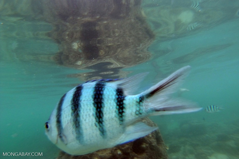 Fish -- sabah_underwater_0001