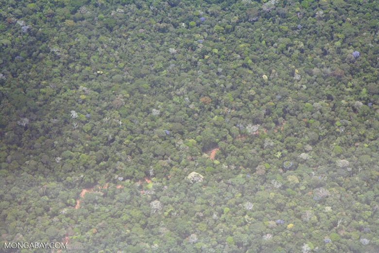 Aerial view of logging road beneath the rain forest canopy