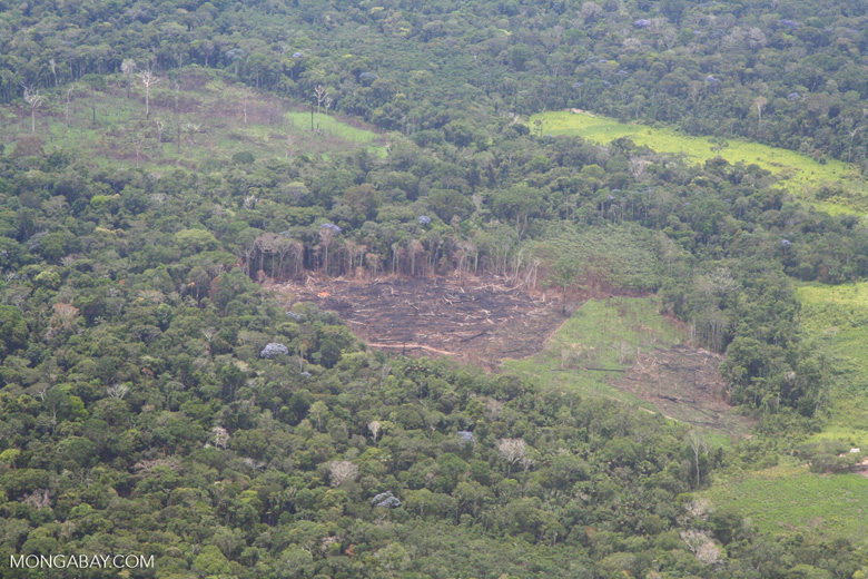 Aerial view of rainforest cleared  for  agriculture