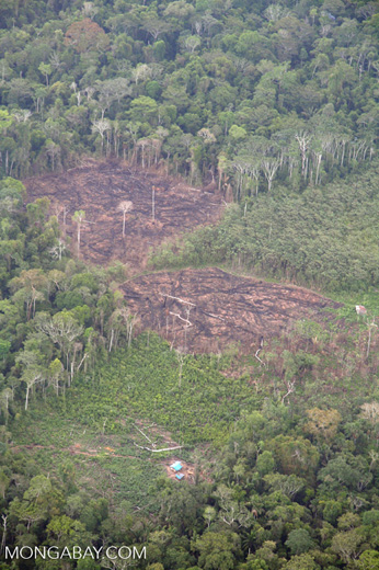 Blocks of rainforest razed for slash-and-burn agriculture in the Peruvian Amazon