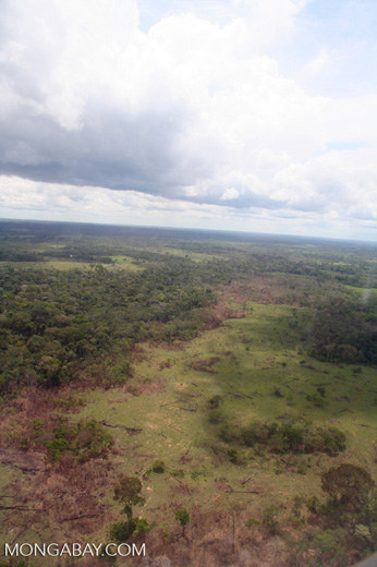 Scrub vegetation and secondary forest following deforestation in the Peruvian Amazon